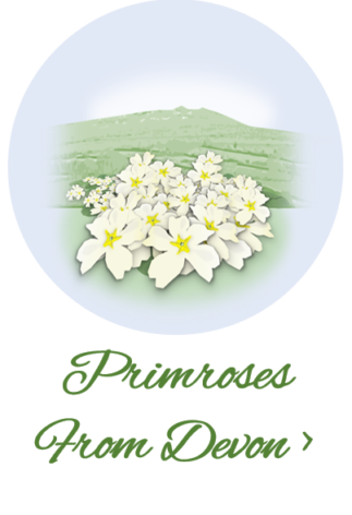 Primroses from Devon mobile link